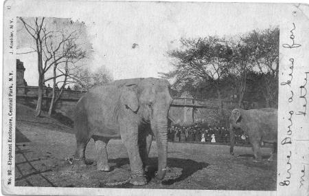 elephantsinpark