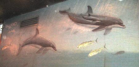 wylandwhales