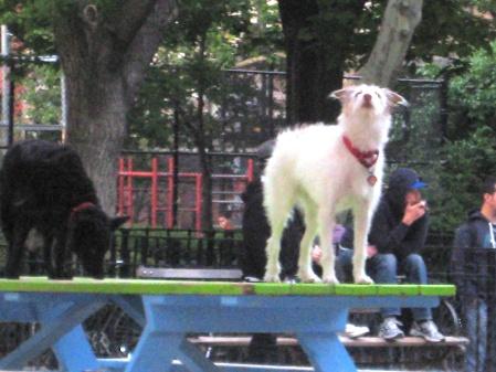Tompkinsdogrun1
