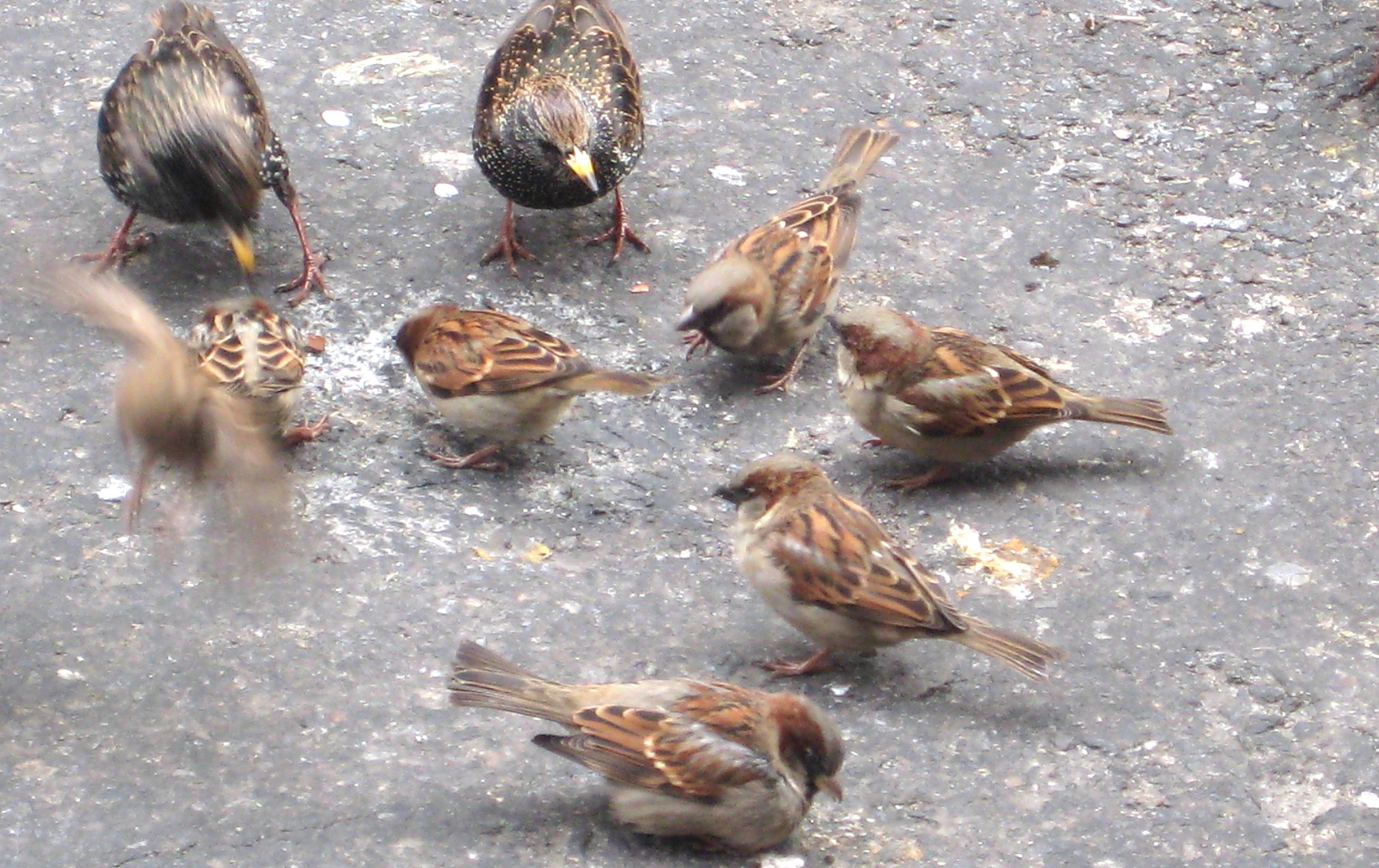 Birds In New York City