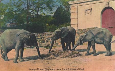 Elephantsbronxzoo