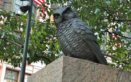 Owlheraldsquare