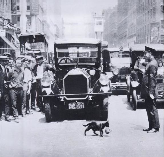 Cop Goes Viral Photo Of New York City: The Cat That Stopped Traffic In 1920s New York