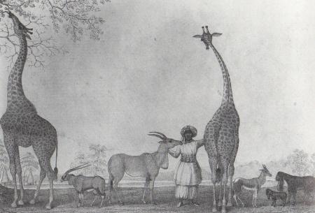 Giraffesdrawing1838