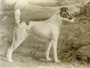 Warrenremedybestinshow1907