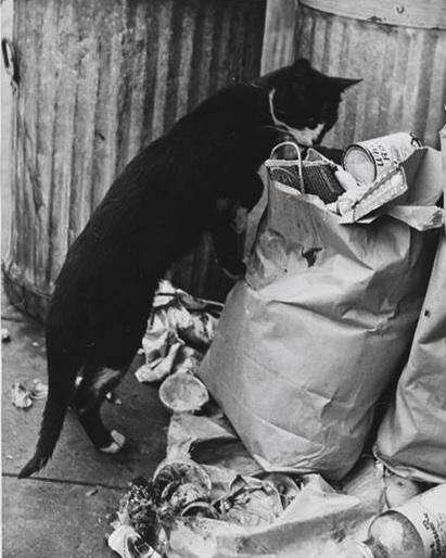 Catincitygarbage1952