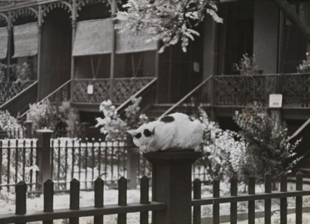Rhinelanderhousescat1937mcny