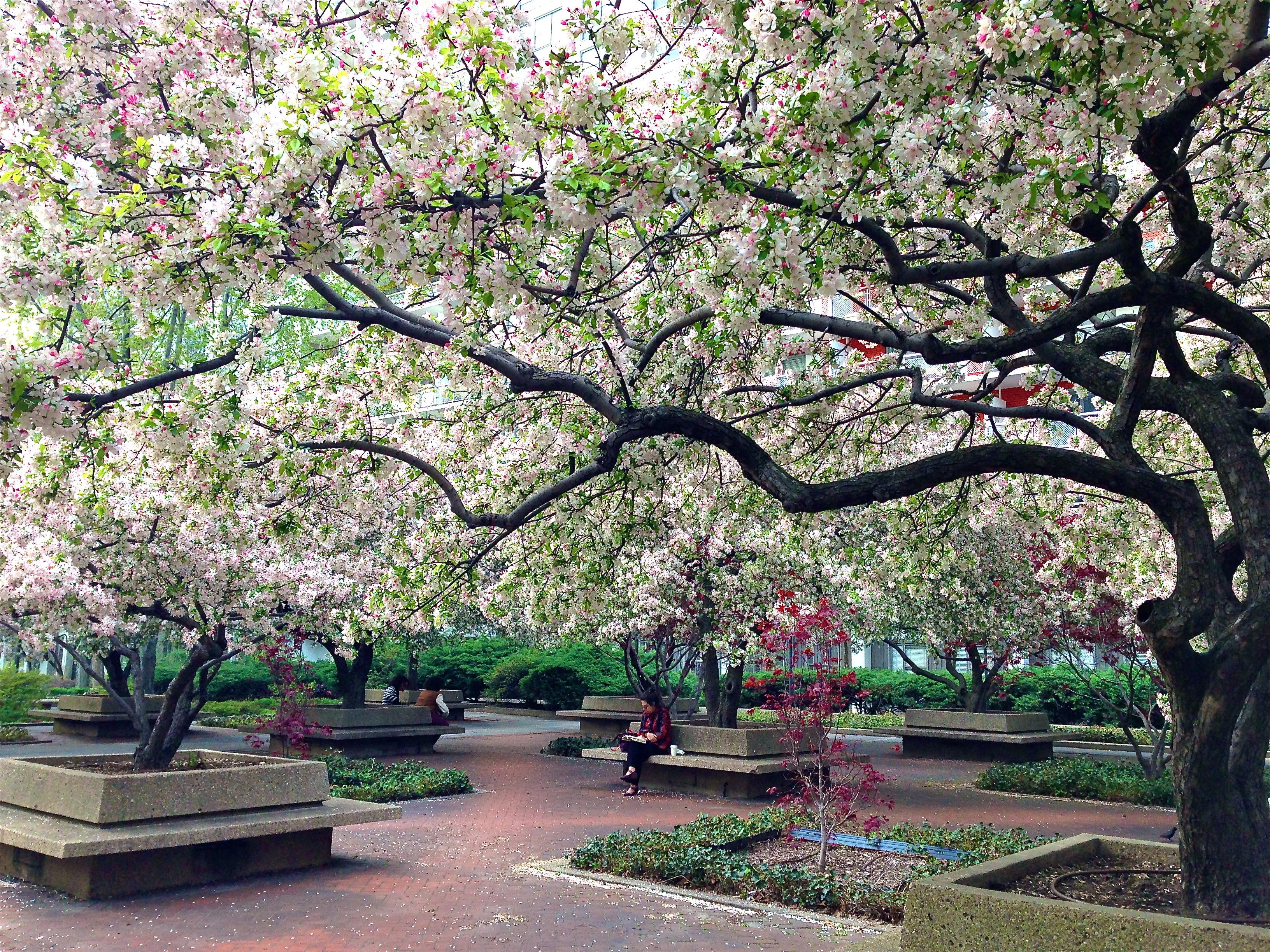 washington square village garden ephemeral new york