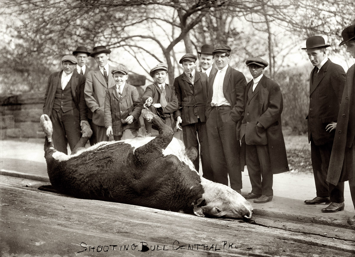 new york slaughter