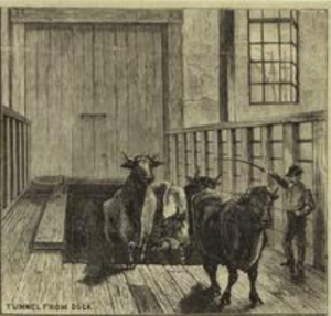 abattoir1877nyplv-l-kingsburythemanhattanabattoir